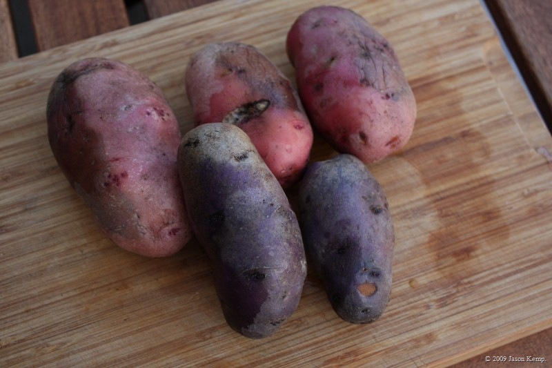 The last potatoes I'll grow until I get that farm.
